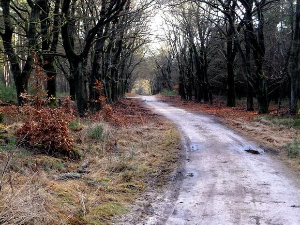 Een prachtige laan in de bossen bij Rozendaal.