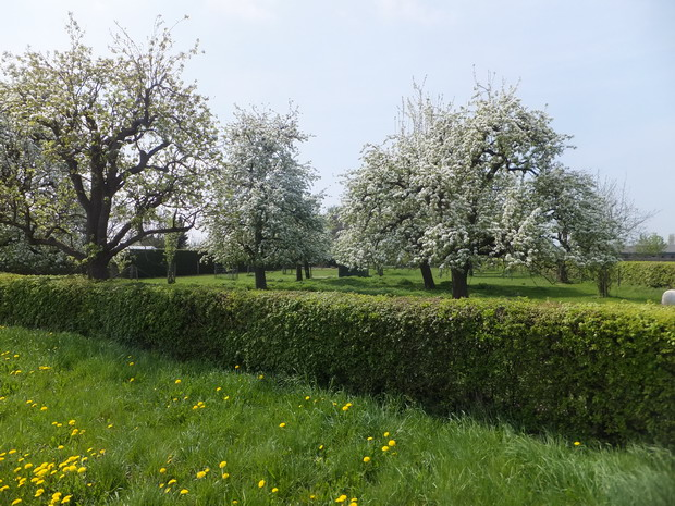 Bloeiende boomgaarden