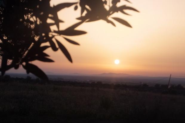 Zonsondergang gezien vanuit de olijvenboomgaard.
