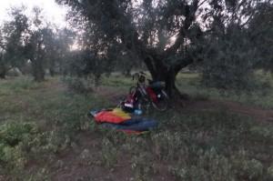 Mijn slaapplaats in de natuur, onder de olijvenboom.