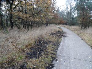 fietspad bij de brandtoren met sporen van de wilde zwijnen.