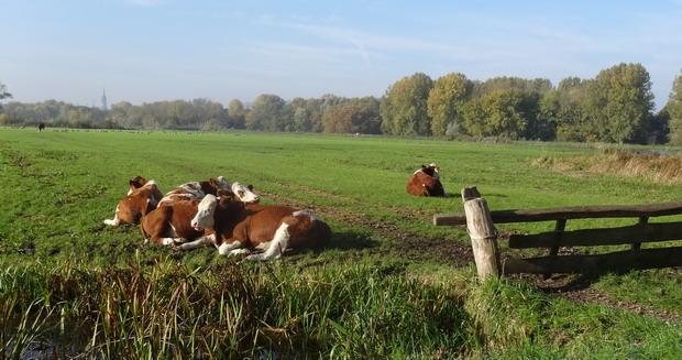 2 km buiten het centrum van Delft is het nog vredig stil in de natuurgebieden van de Beislandsepolder