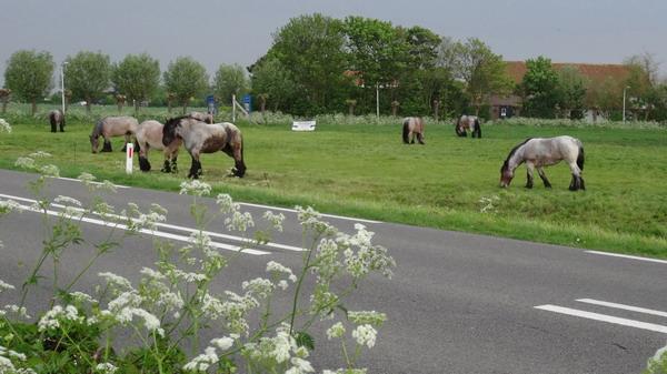 Treekpaarden in Noordwelle